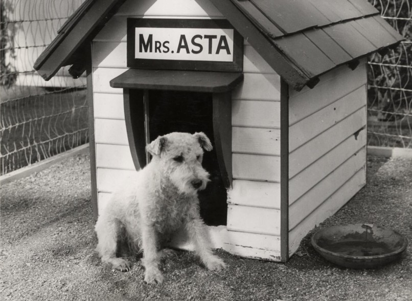 asta thin man e1427860376736 The 101 Greatest Dogs in Film History