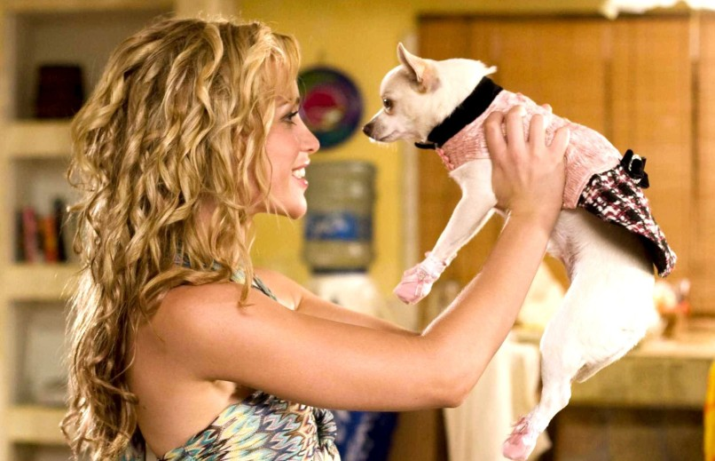 beverly hills chihuahua e1427830216517 The 101 Greatest Dogs in Film History