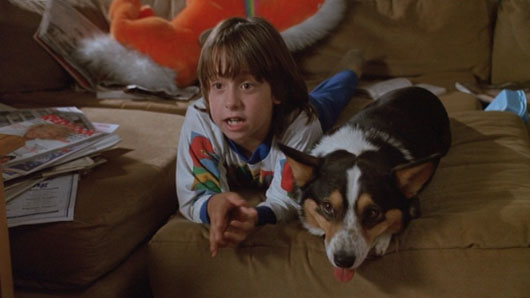 elvis dont tell mom babysitter The 101 Greatest Dogs in Film History