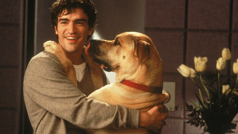 harry truth about cats and dogs The 101 Greatest Dogs in Film History
