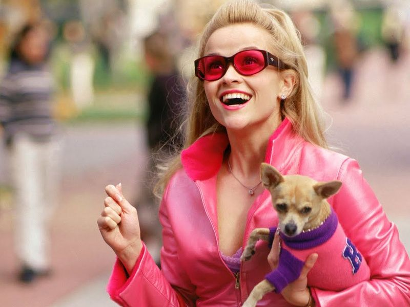legally blonde bruiser The 101 Greatest Dogs in Film History