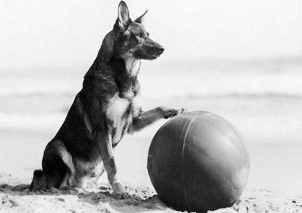 rin tin tin The 101 Greatest Dogs in Film History