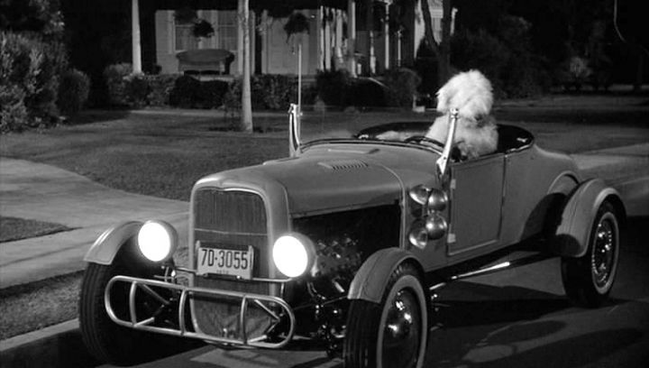 the shaggy dog The 101 Greatest Dogs in Film History