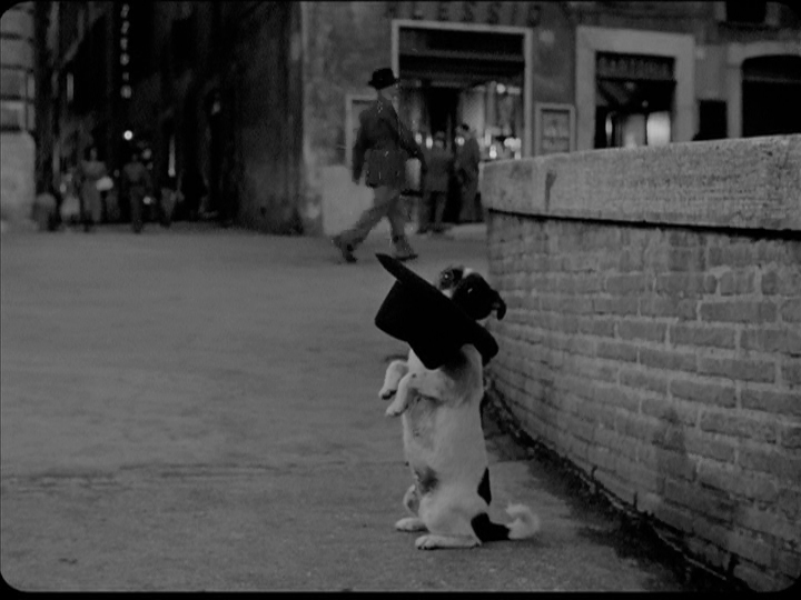umberto flike The 101 Greatest Dogs in Film History