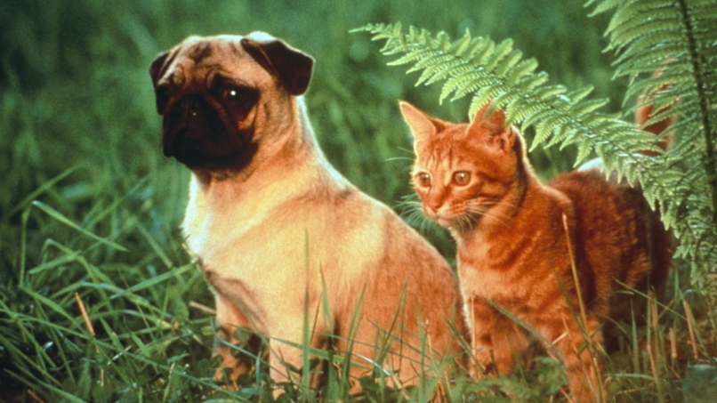 adventures of milo and otis The 101 Greatest Dogs in Film History