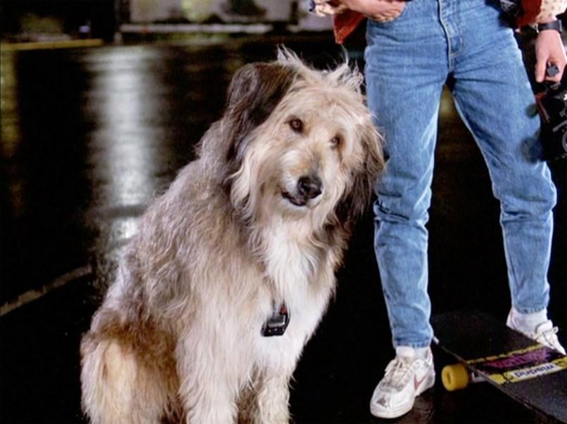 einstein The 101 Greatest Dogs in Film History