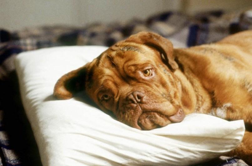 hooch e1427898327703 The 101 Greatest Dogs in Film History