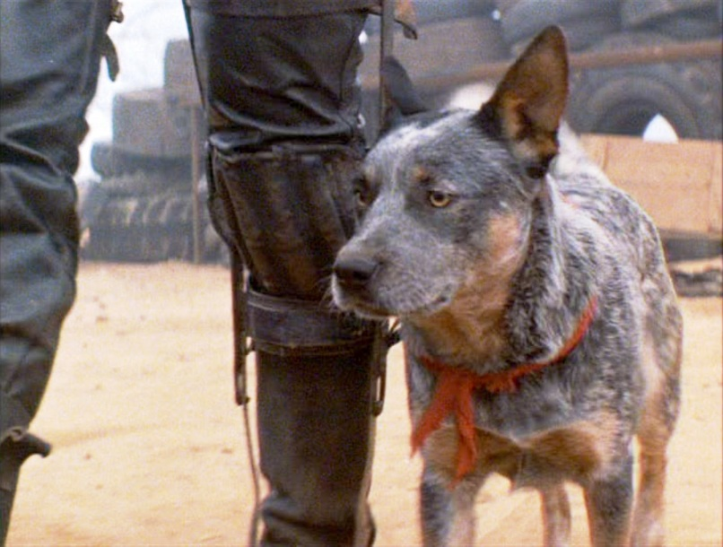 road warrior pooch The 101 Greatest Dogs in Film History