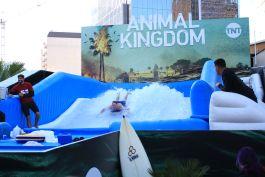 Animal Kingdom // Photo by Heather Kaplan