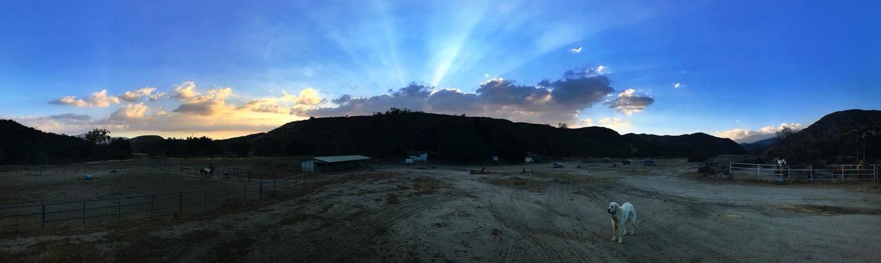 Scott Reeder's ranch harry