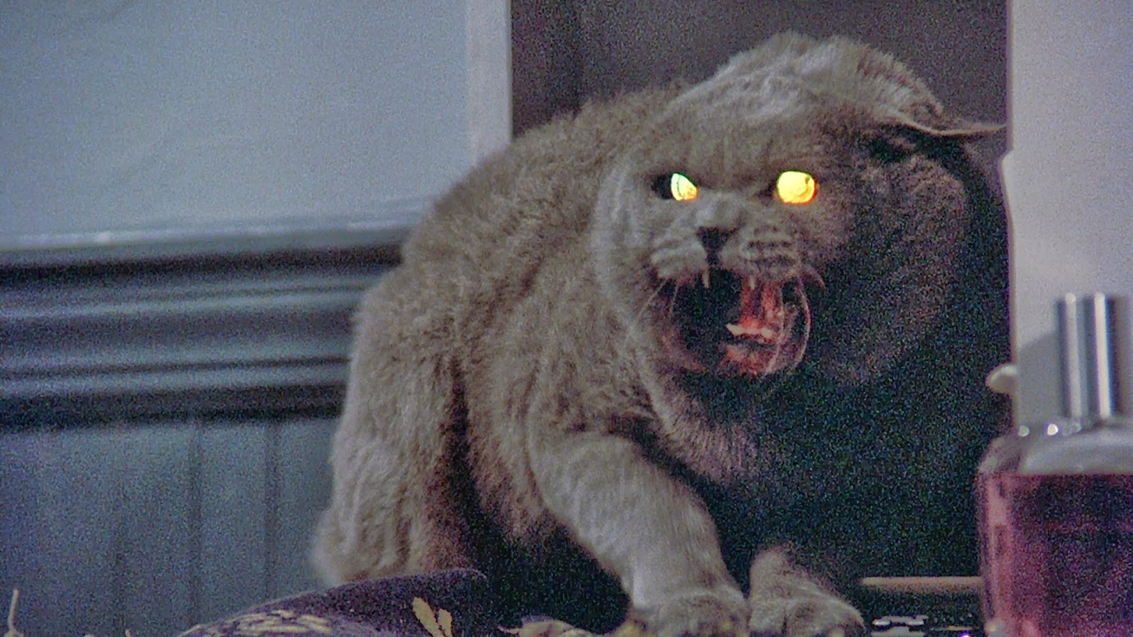 Cat, Pet Sematary, Church, Stephen King