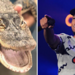 Chance the Rapper Alligator Chance the Snapper chicago