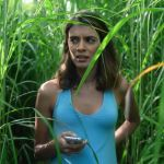 In the Tall Grass (Netflix)