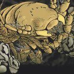 Macrostylis metallicola - Metallica deep sea creature
