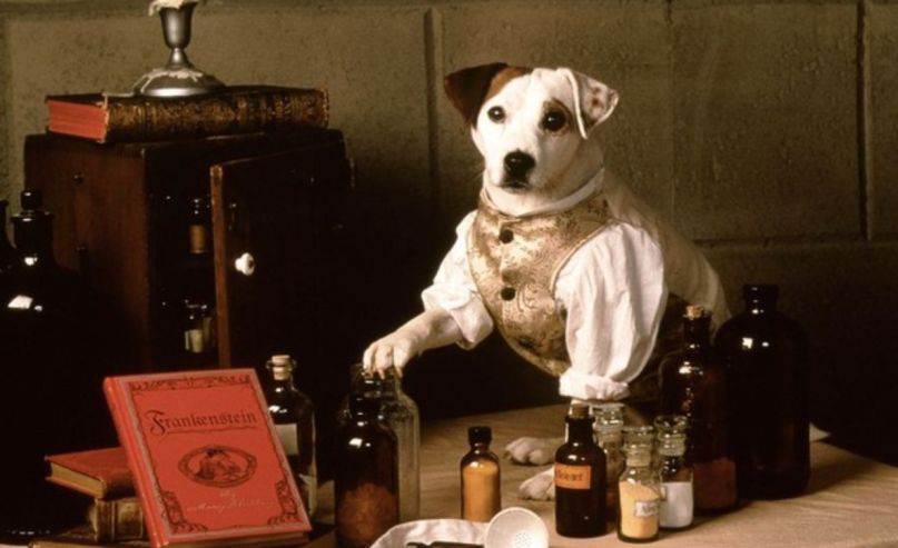 Wishbone to Get a Feature Film